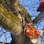 north-carolina-insurance-tree-removal