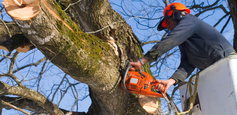 north-carolina-insurance-tree-removal